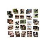 Memória - háziállatok (20 pár)