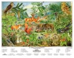 Az erdő életközössége fixi + munkaoldal tanulói munkalap