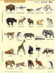 Vadon élő állatok lefűzhető fixi tanulói munkalap+munkaoldal