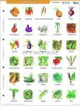 Zöldségek + munkaoldal fixi  tanulói munkalap